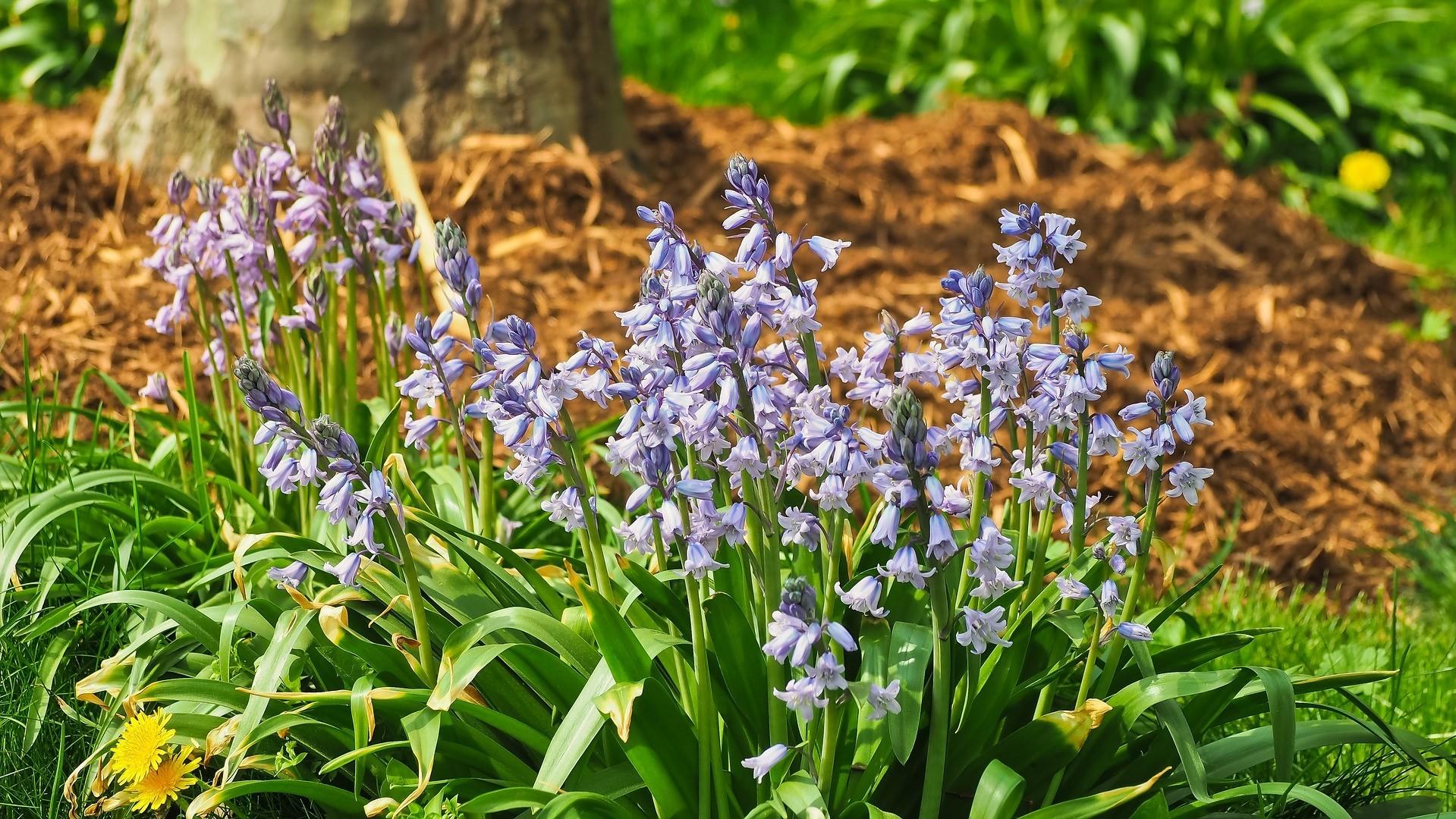 Attract Bees - flower - wildflowers - bluebells