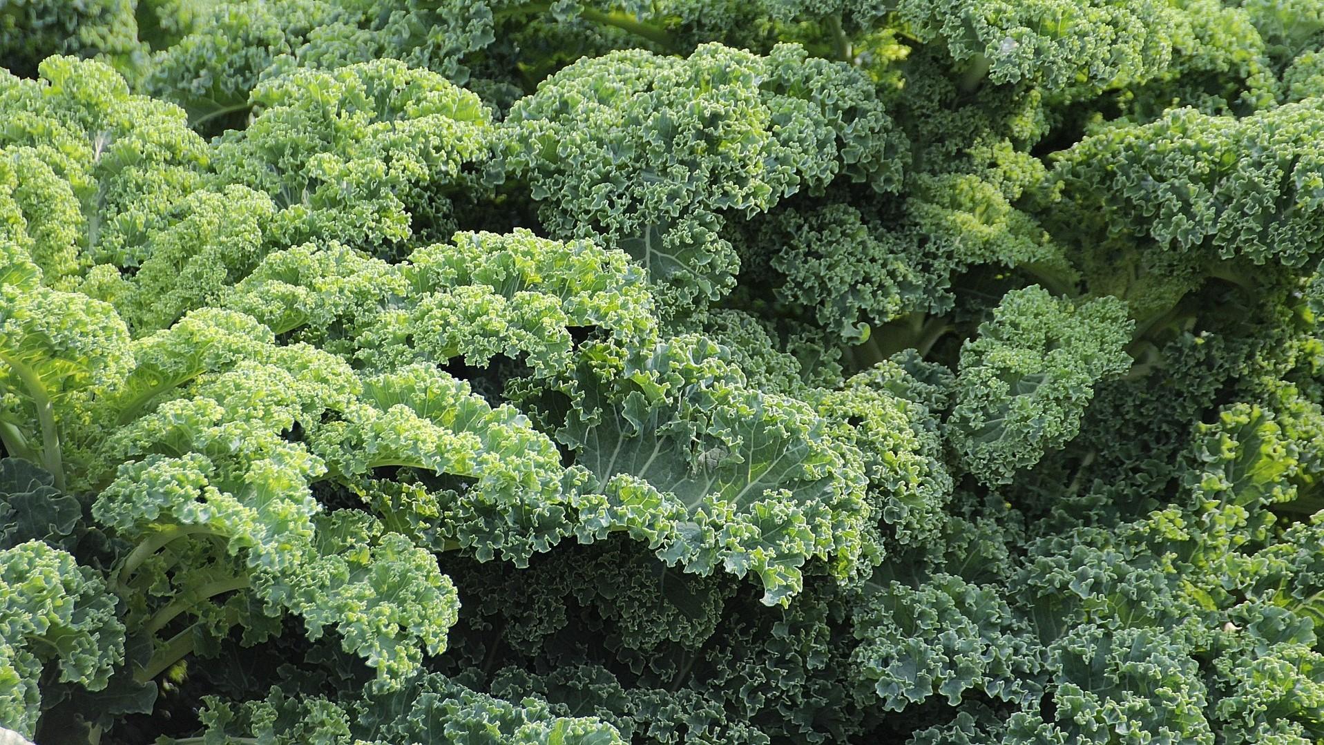 Attract Bees - flower - vegetable - kale