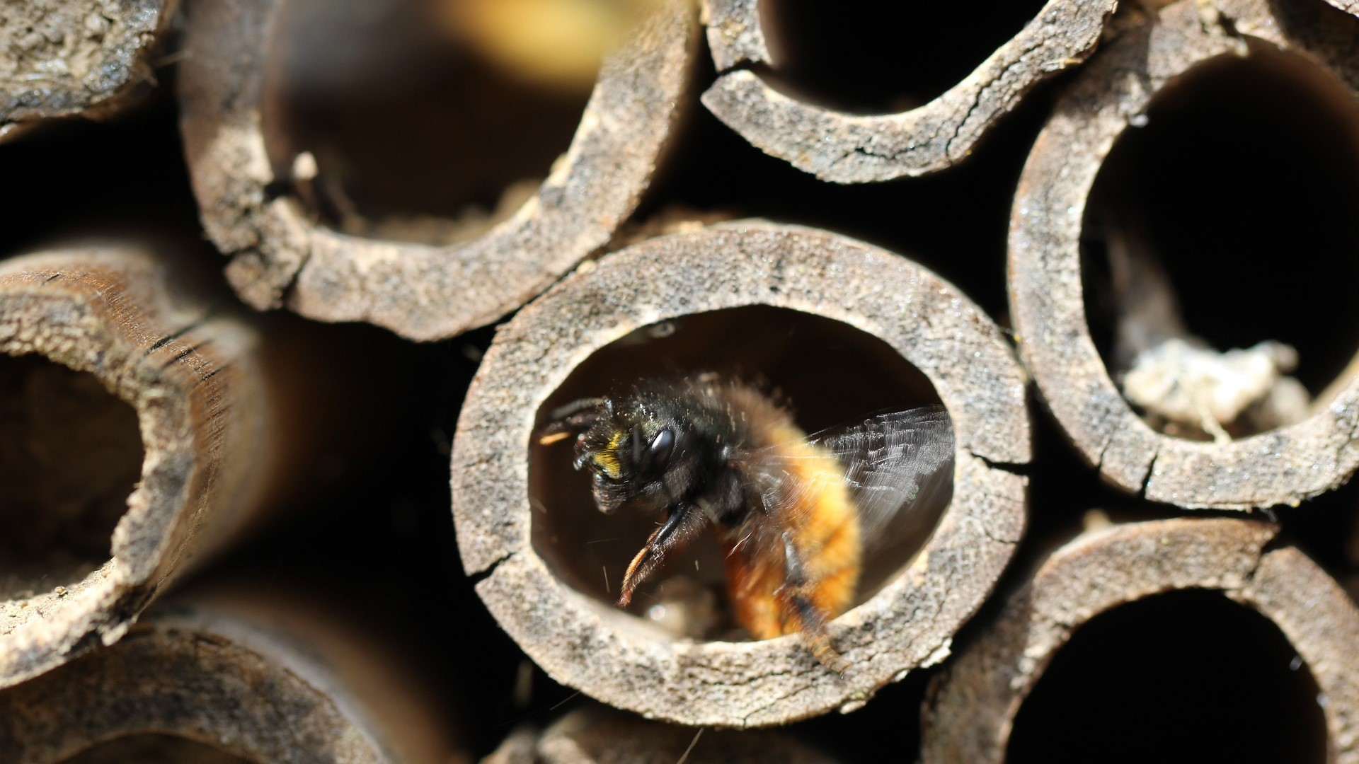 Attract Bees - Attract mason bees - mason bee nesting - Bee hotel 4