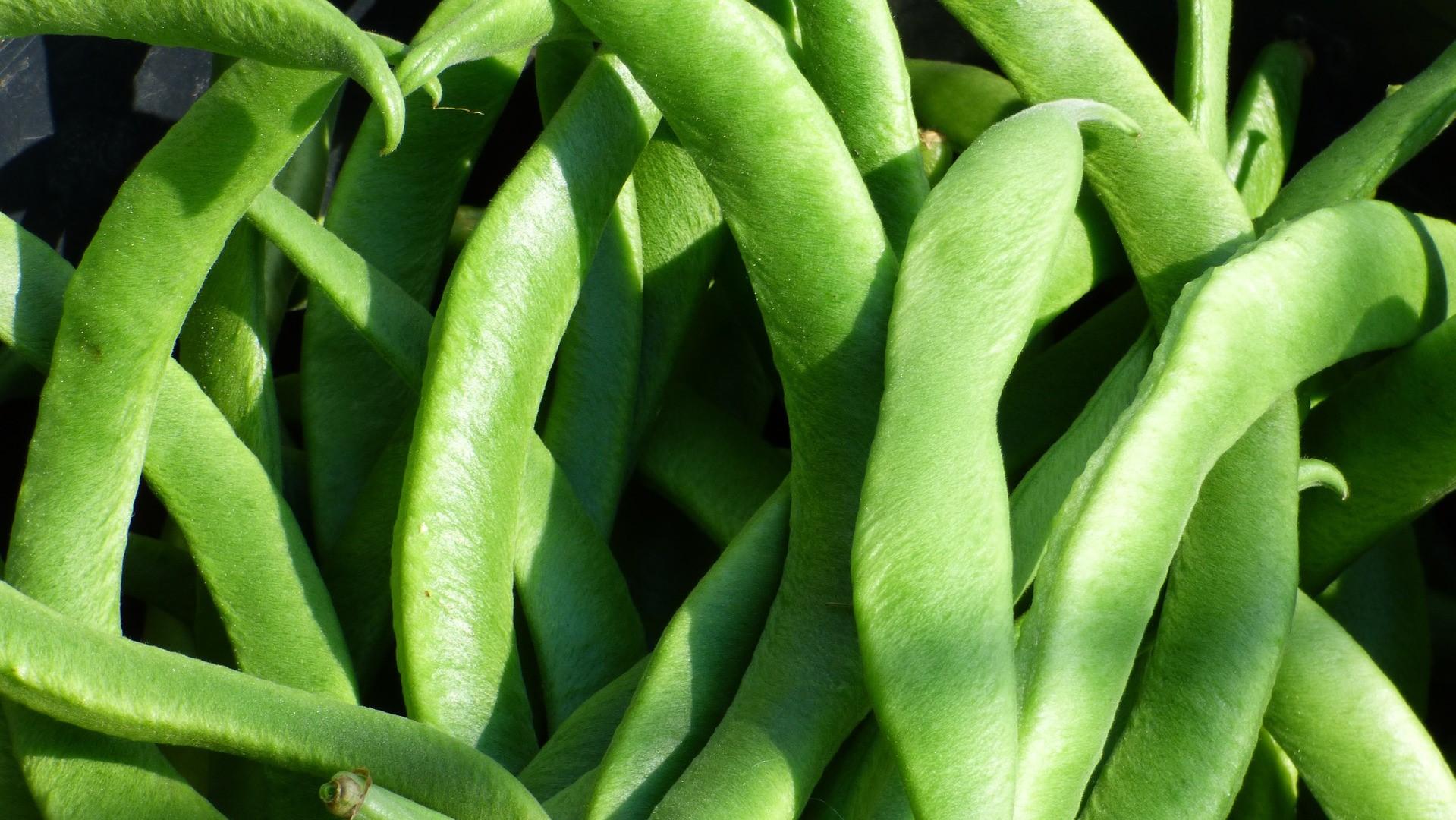 Attract Bees - flower - runner-beans - broad beans