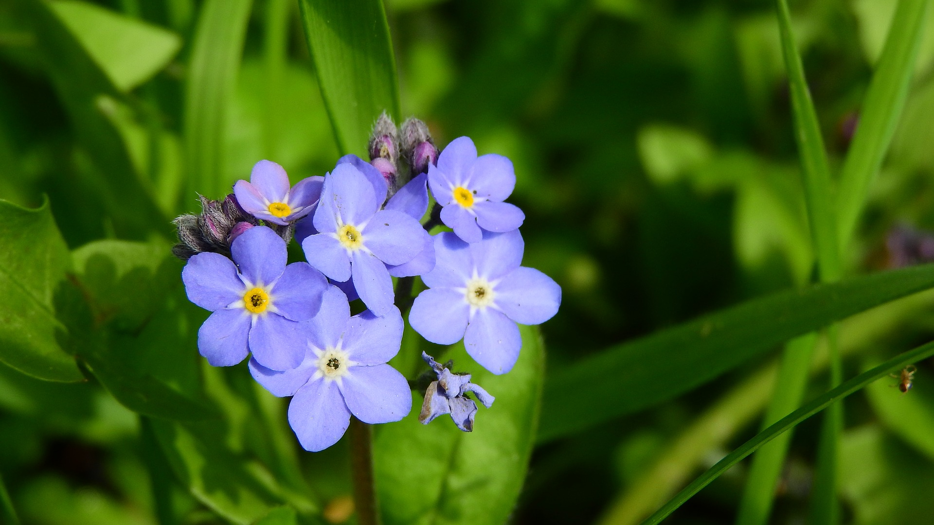 Attract Bees - forget-me-not-forest